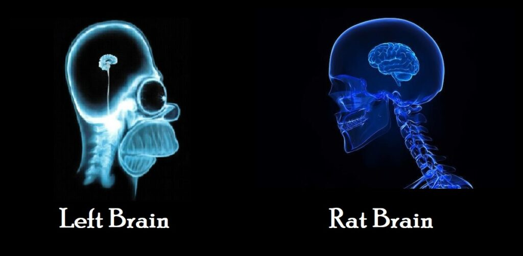 rat brain alcoholic