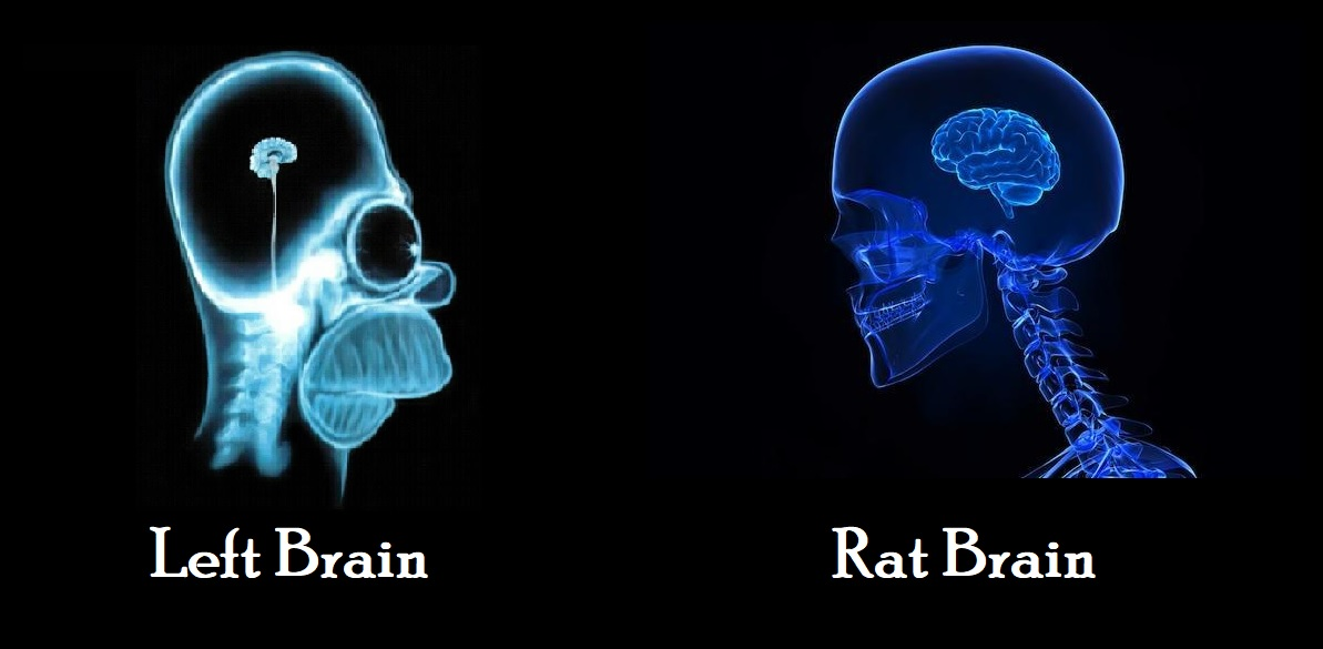 Left Brain vs. Rat Brain