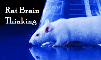 rat brain thinking