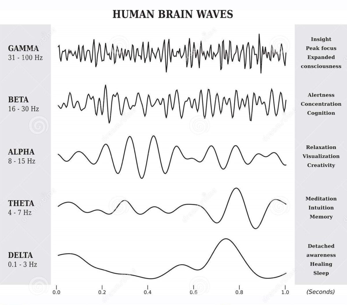 brain waves indicate meditative & intuitive states of consciousness
